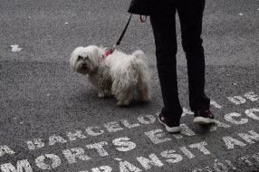 One of the many perros of Barcelona.
